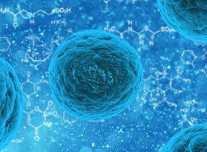 Stem Cells SUI Image